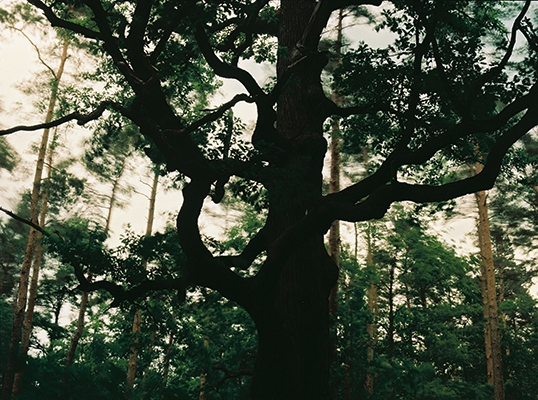 http://www.emanueletorti.it/files/gimgs/th-10_3_tree_v2.jpg