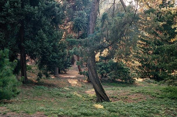 http://www.emanueletorti.it/files/gimgs/th-21_giardino_zen.jpg
